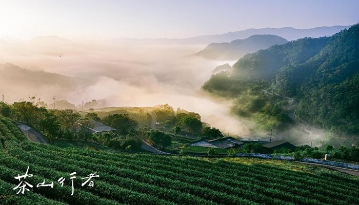 台灣綠 | 深度包種茶旅 1