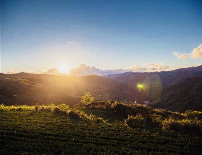 Sunrise Tour|Dawn in Tea mountains (half day tour) 1